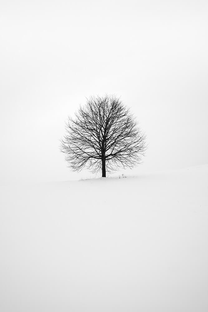 still-life (5)